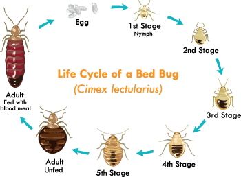 Pdf cycle bug life